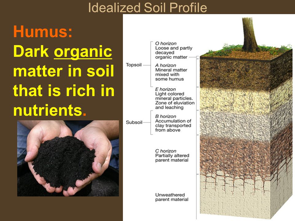 Idealized Soil Profile