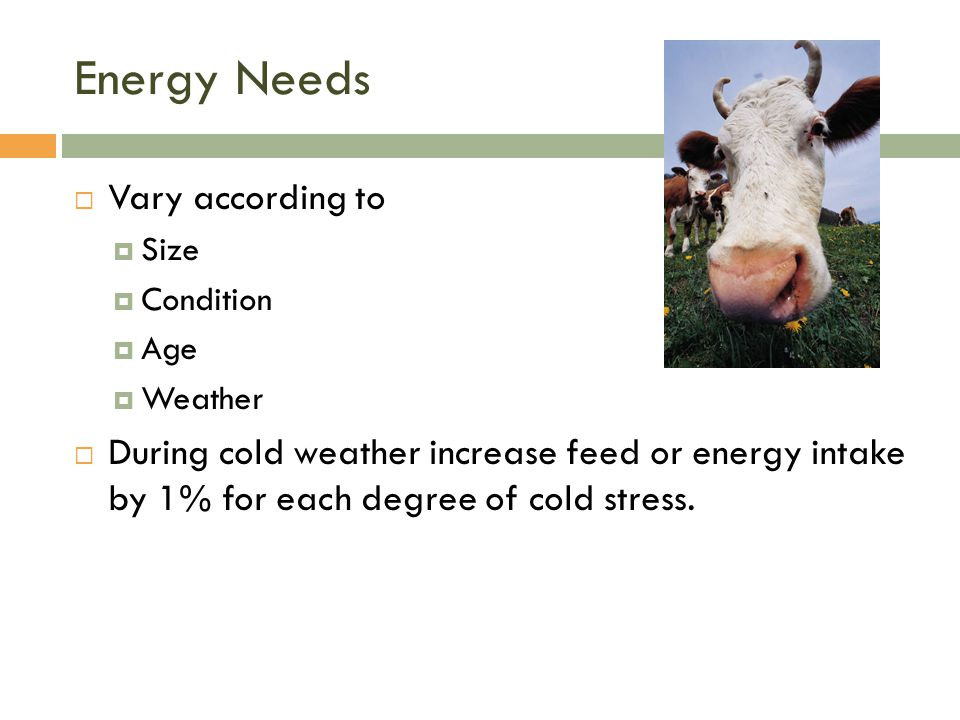 Energy Needs Vary according to