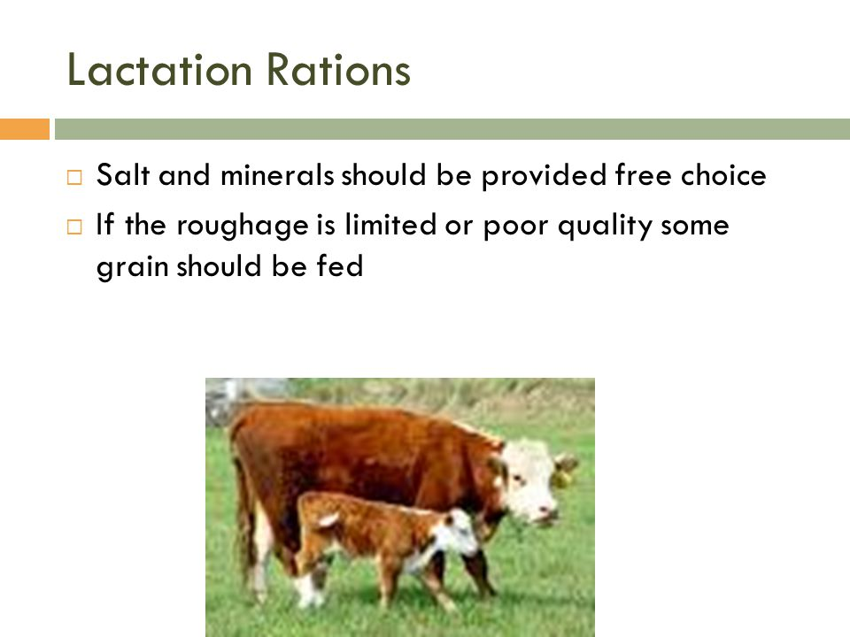Lactation Rations Salt and minerals should be provided free choice