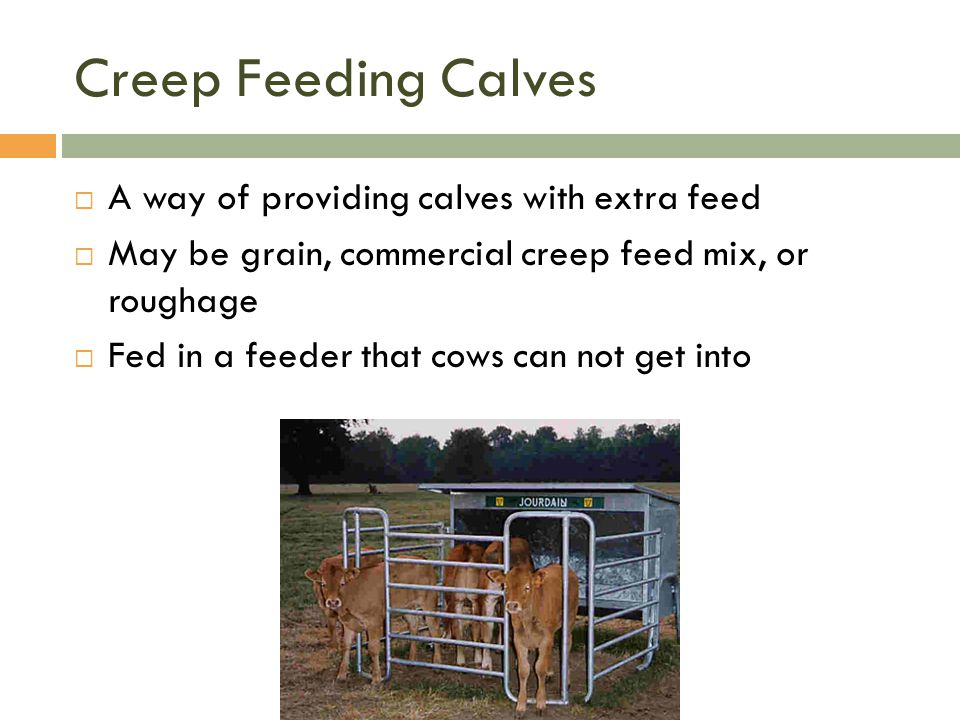 Creep Feeding Calves A way of providing calves with extra feed