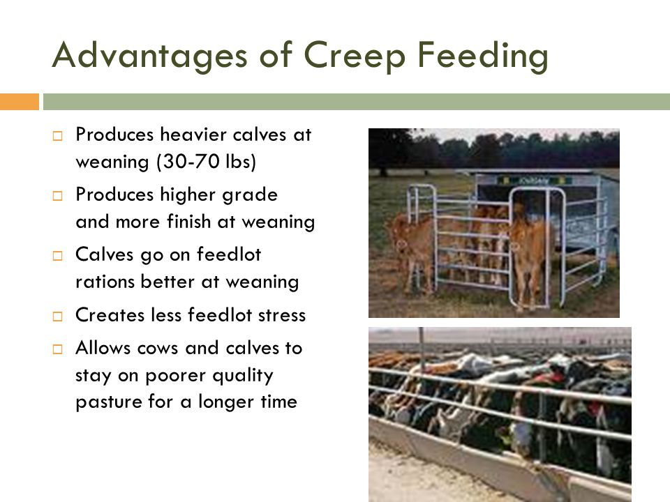 Advantages of Creep Feeding