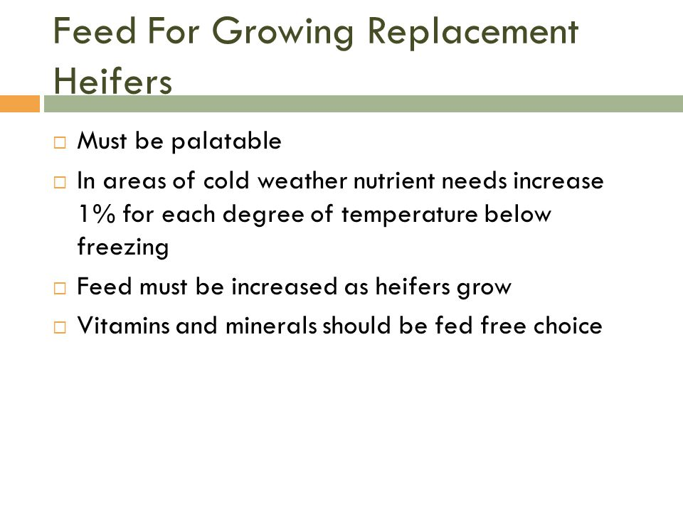 Feed For Growing Replacement Heifers