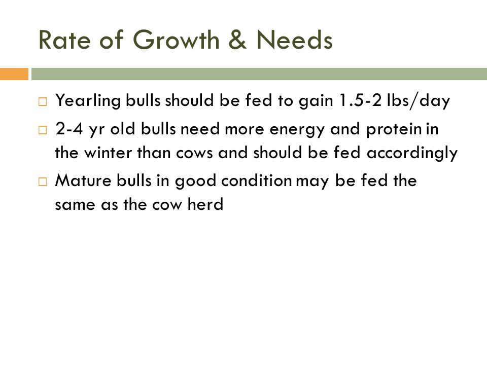 Rate of Growth & Needs Yearling bulls should be fed to gain 1.5-2 lbs/day.