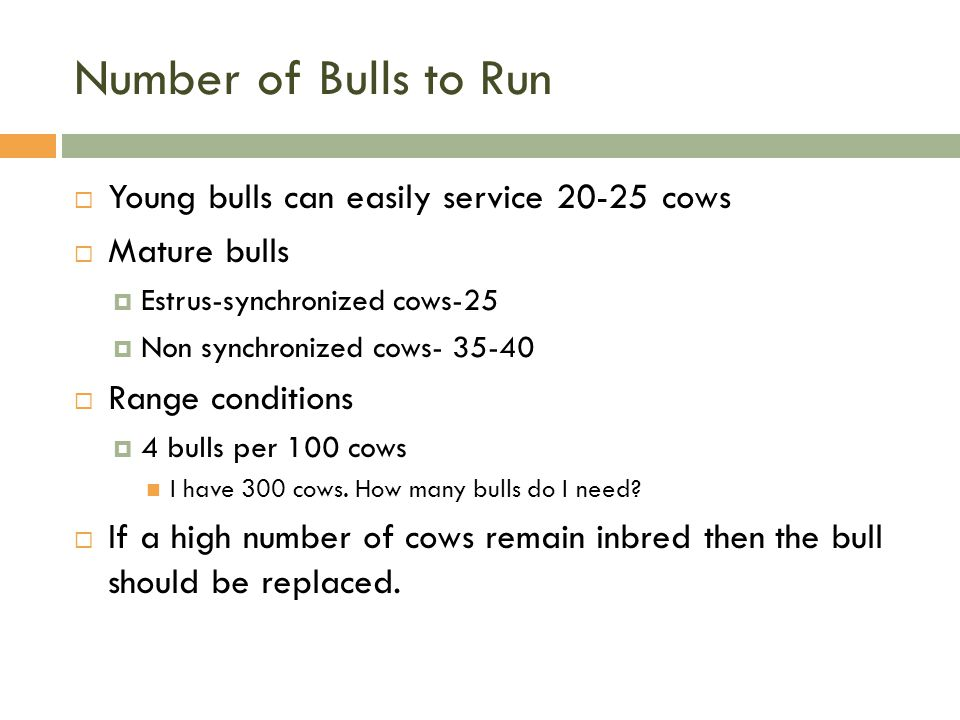Number of Bulls to Run Young bulls can easily service 20-25 cows