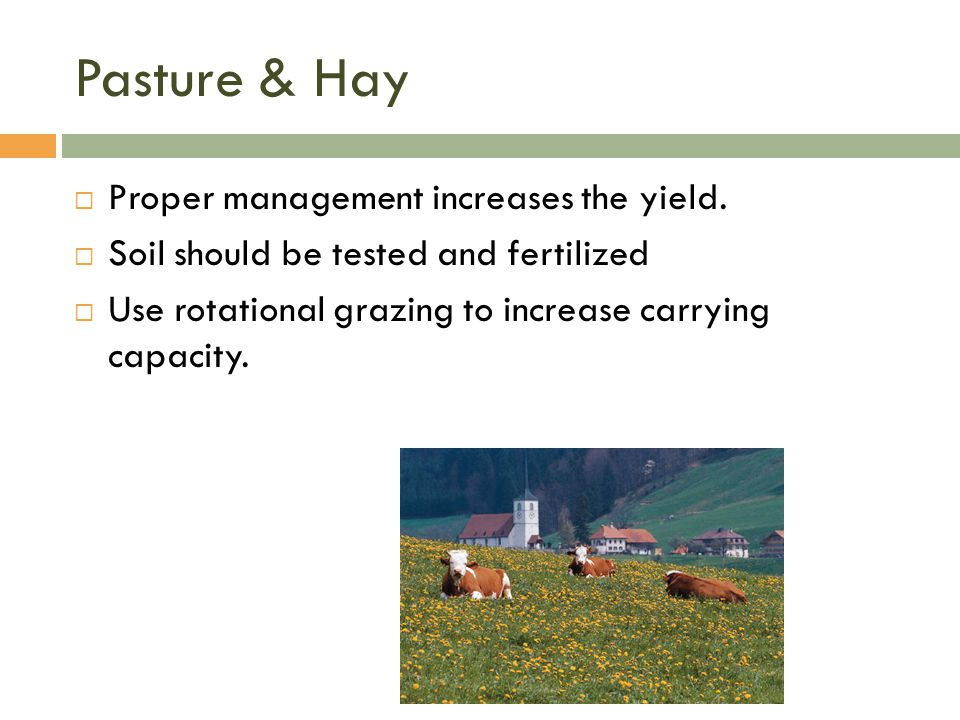 Pasture & Hay Proper management increases the yield.