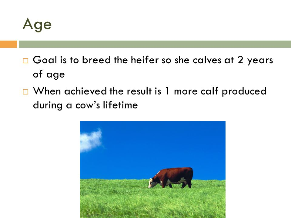 Age Goal is to breed the heifer so she calves at 2 years of age