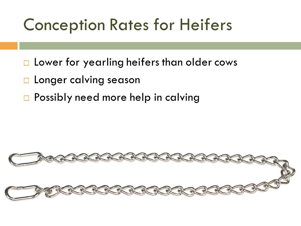Conception Rates for Heifers
