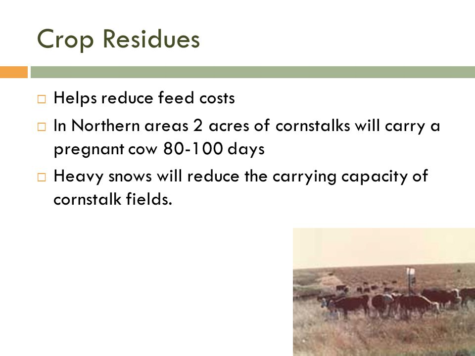 Crop Residues Helps reduce feed costs