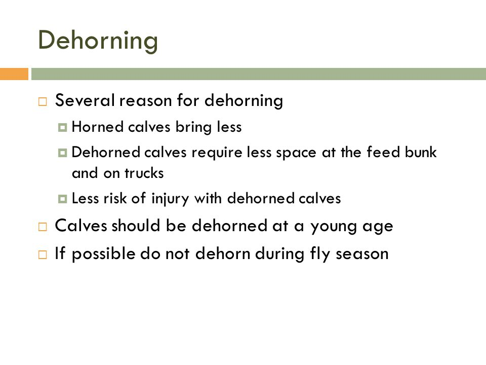 Dehorning Several reason for dehorning