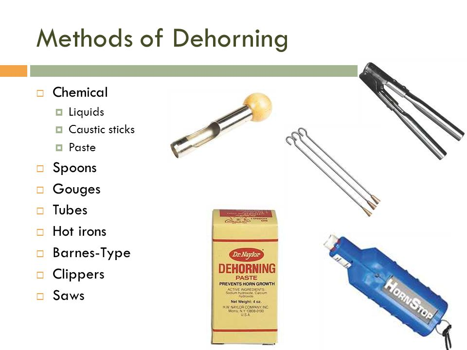 Methods of Dehorning Chemical Spoons Gouges Tubes Hot irons