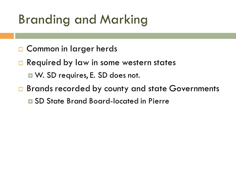 Branding and Marking Common in larger herds
