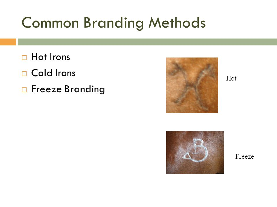 Common Branding Methods