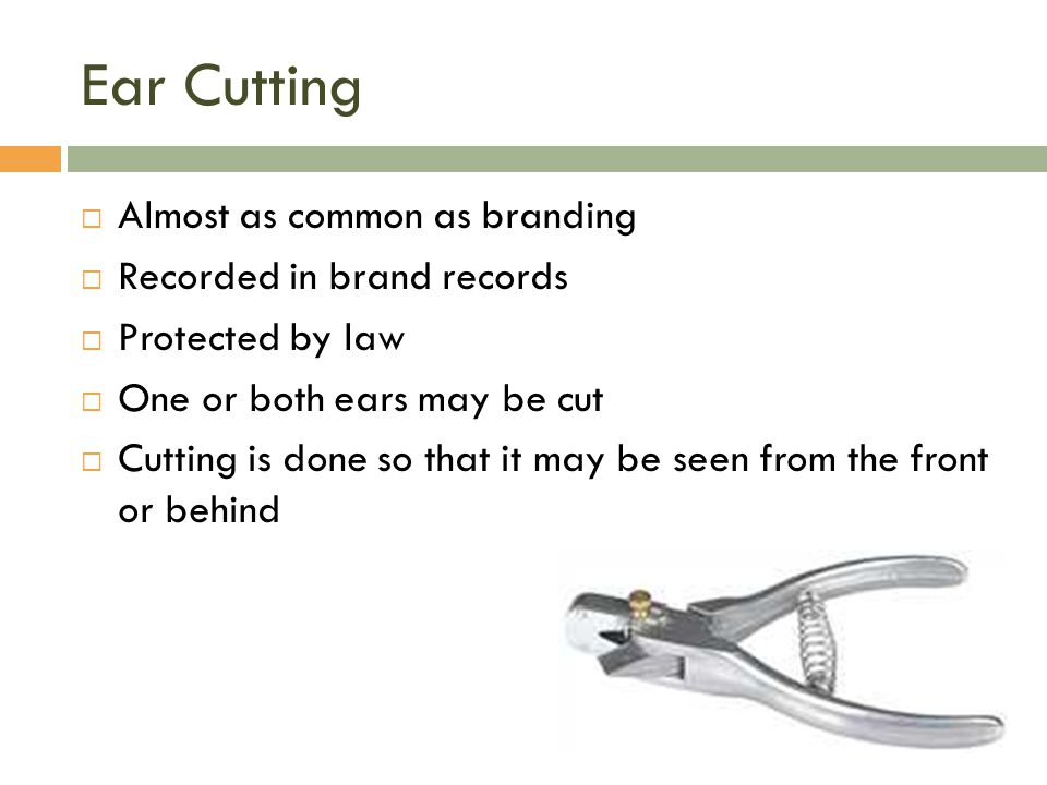 Ear Cutting Almost as common as branding Recorded in brand records