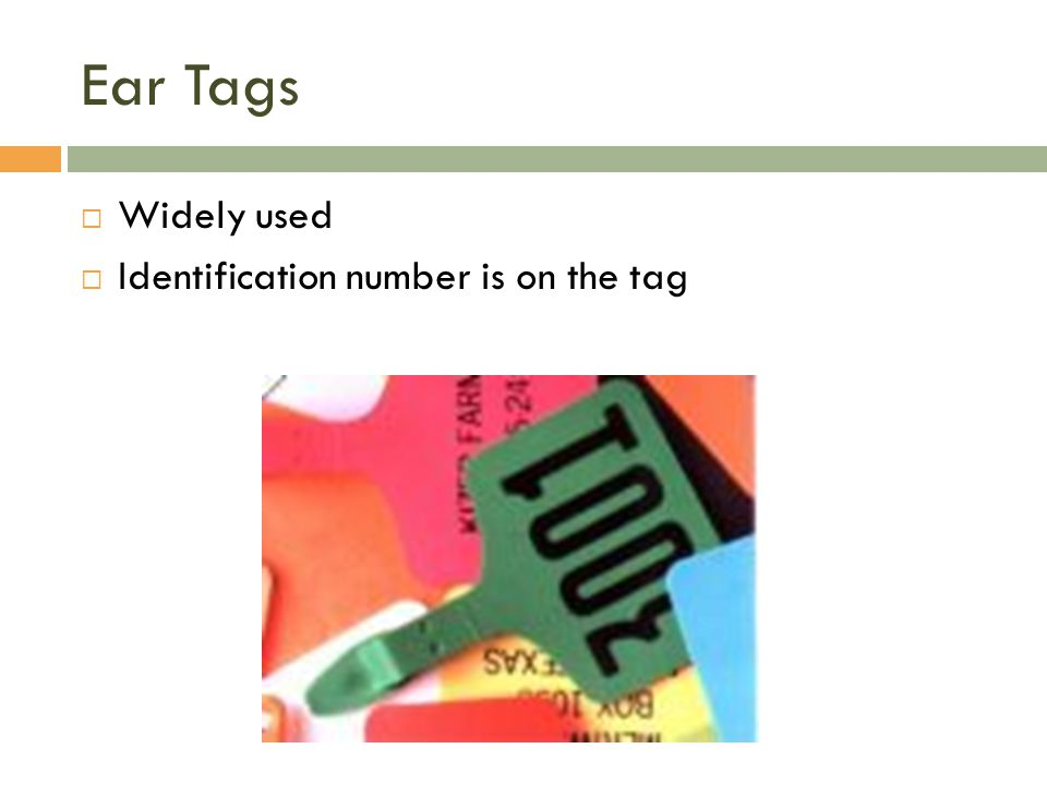 Ear Tags Widely used Identification number is on the tag