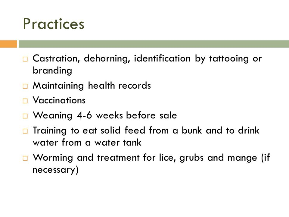 Practices Castration, dehorning, identification by tattooing or branding. Maintaining health records.