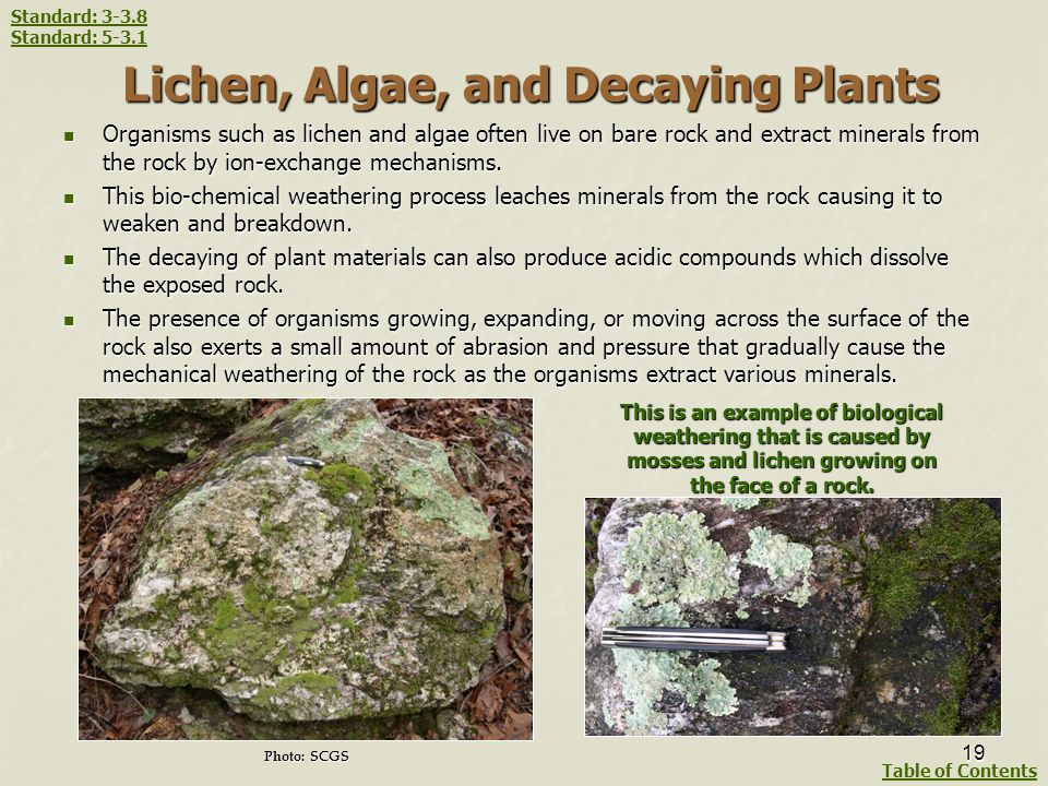 Lichen, Algae, and Decaying Plants