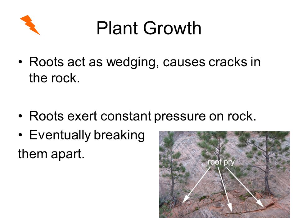 Plant Growth Roots act as wedging, causes cracks in the rock.