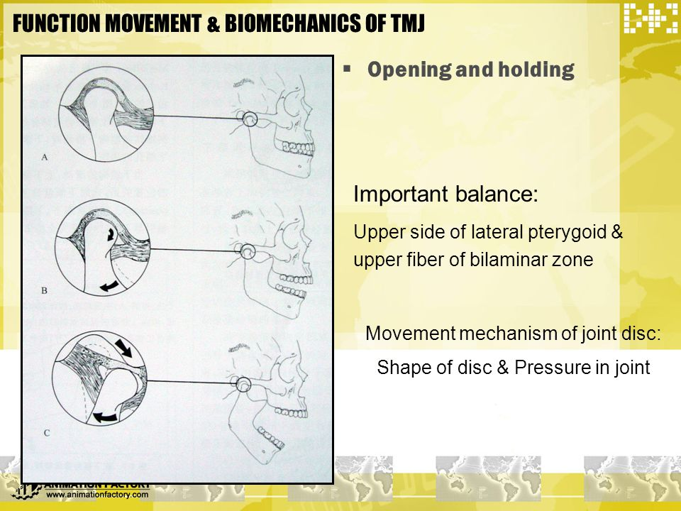 FUNCTION MOVEMENT & BIOMECHANICS OF TMJ