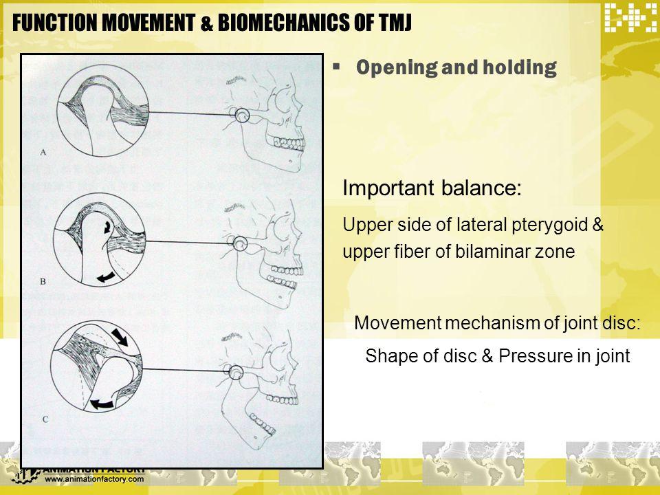 FUNCTION MOVEMENT & BIOMECHANICS OF TMJ