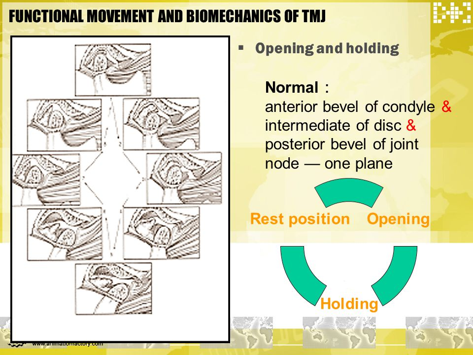 FUNCTIONAL MOVEMENT AND BIOMECHANICS OF TMJ