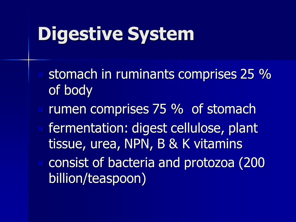 Digestive System stomach in ruminants comprises 25 % of body