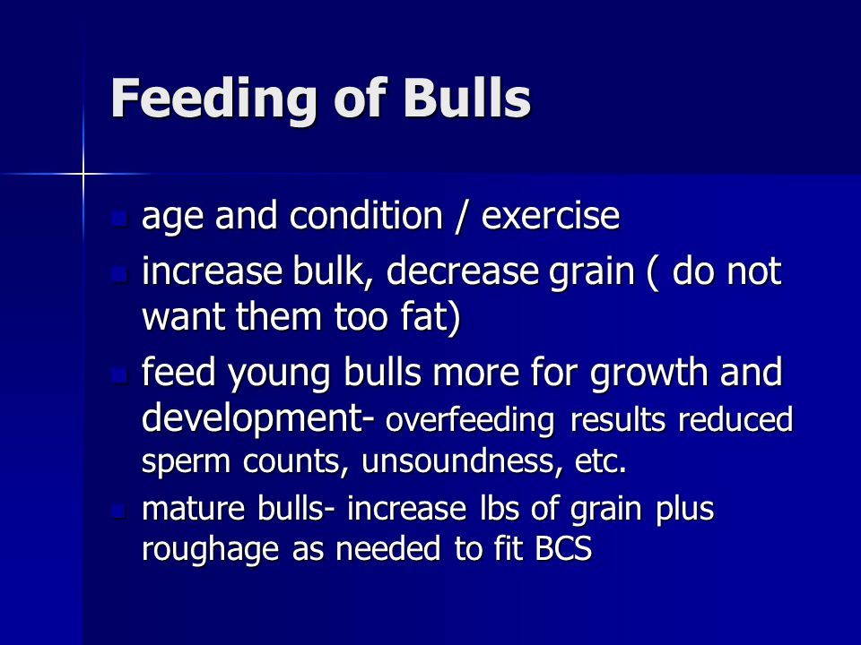 Feeding of Bulls age and condition / exercise