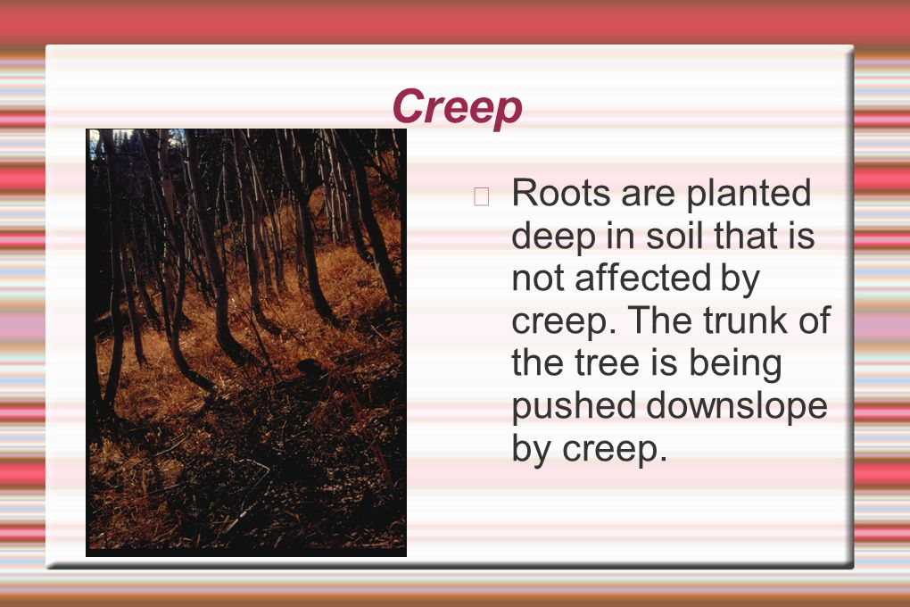 Creep Roots are planted deep in soil that is not affected by creep.