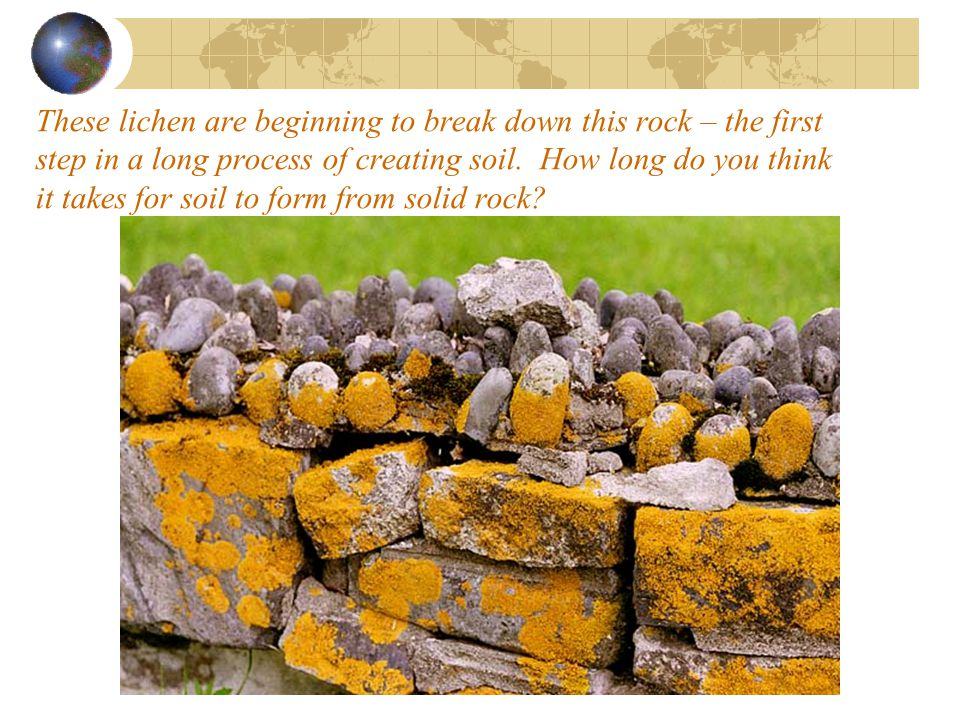 These lichen are beginning to break down this rock – the first step in a long process of creating soil.