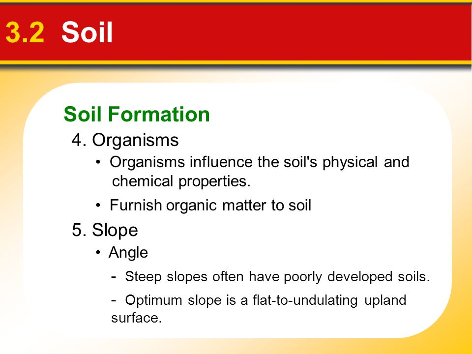 3.2 Soil Soil Formation 4. Organisms 5. Slope
