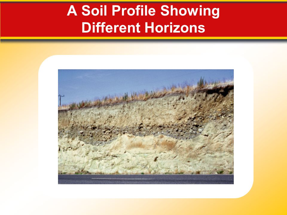A Soil Profile Showing Different Horizons