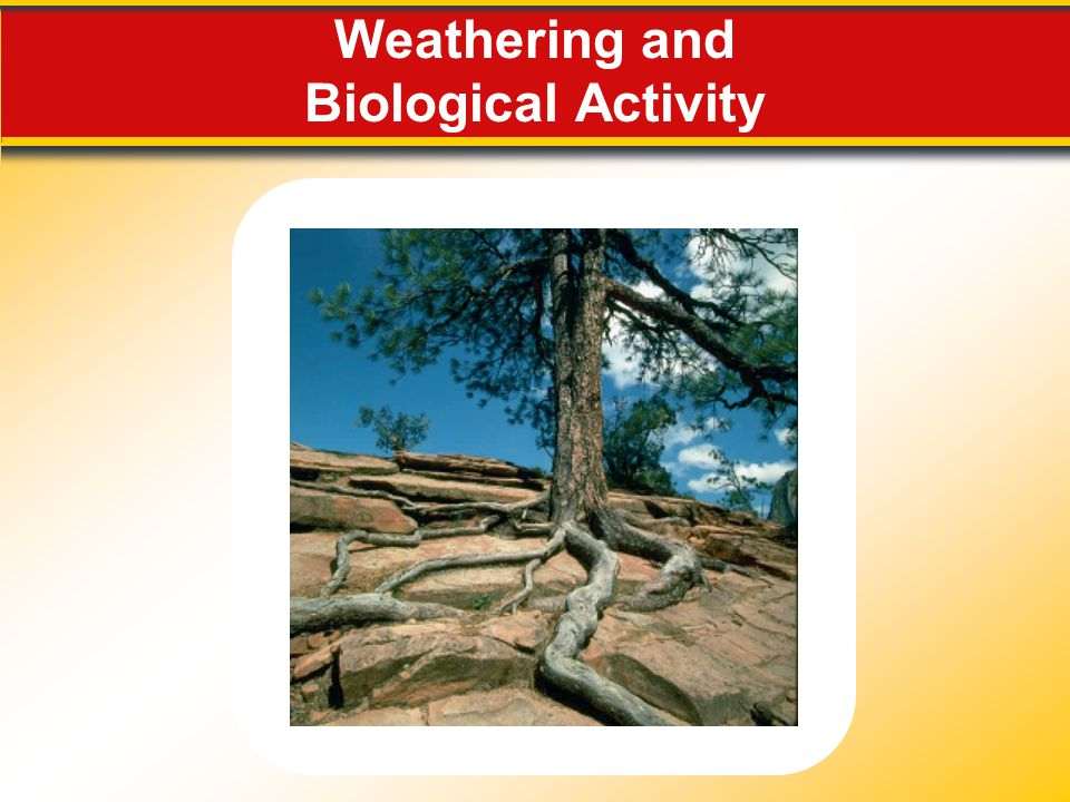 Weathering and Biological Activity