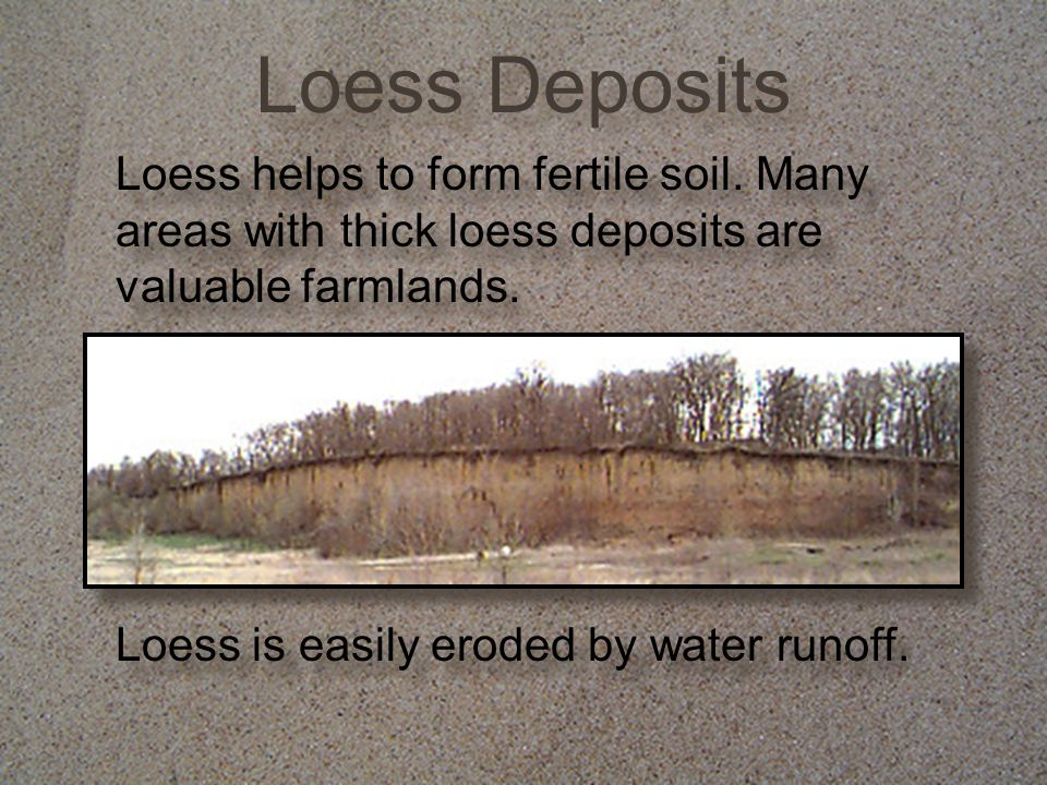 Loess Deposits Loess helps to form fertile soil. Many areas with thick loess deposits are valuable farmlands.