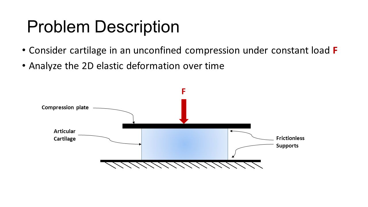 Problem Description Consider cartilage in an unconfined compression under constant load F. Analyze the 2D elastic deformation over time.
