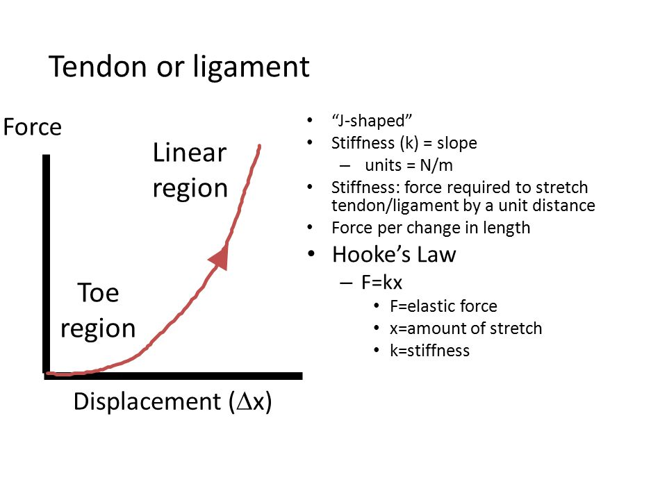 Tendon or ligament Linear Toe region Force Displacement (Dx)