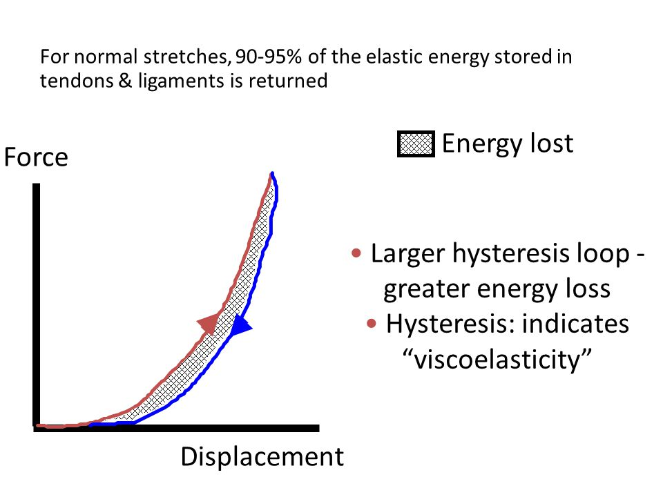 For normal stretches, 90-95% of the elastic energy stored in tendons & ligaments is returned