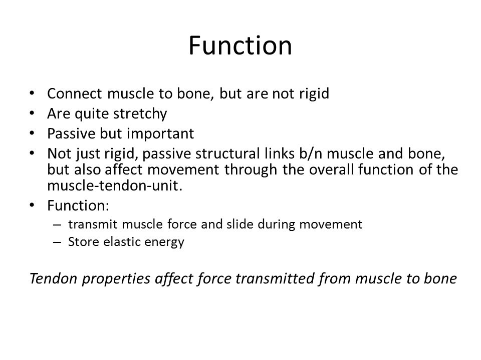Function Connect muscle to bone, but are not rigid Are quite stretchy