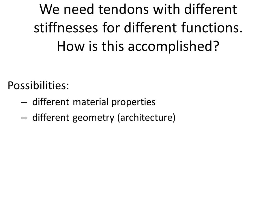 We need tendons with different stiffnesses for different functions