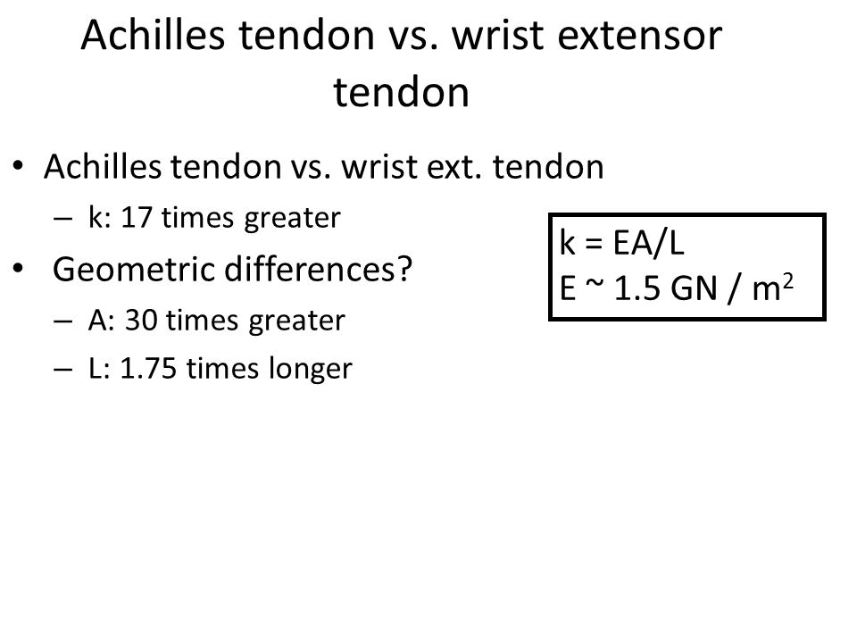 Achilles tendon vs. wrist extensor tendon