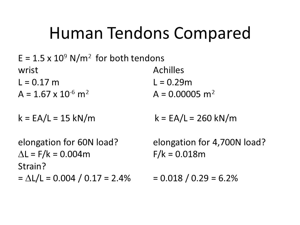 Human Tendons Compared