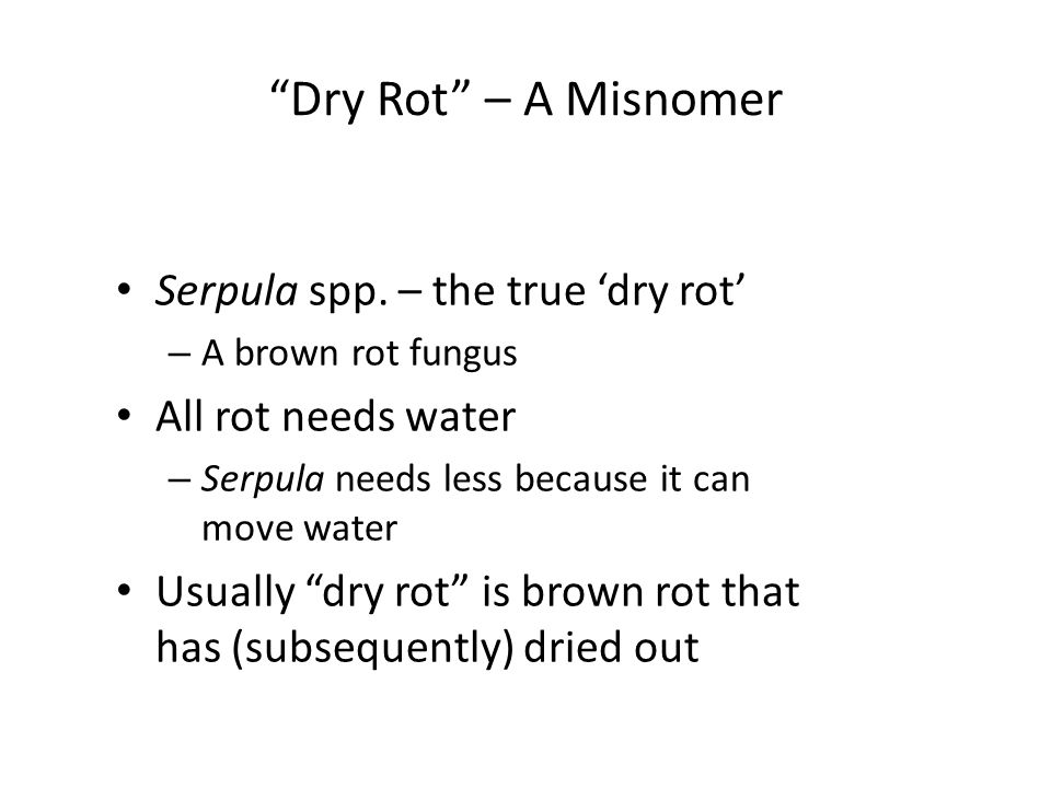 Dry Rot – A Misnomer Serpula spp. – the true 'dry rot'