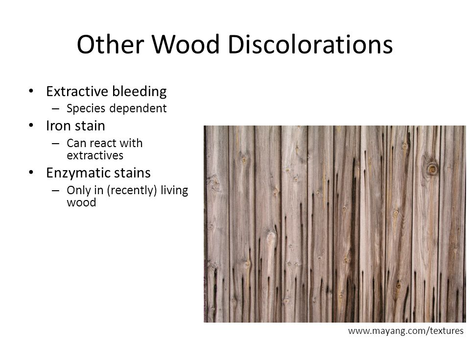 Other Wood Discolorations