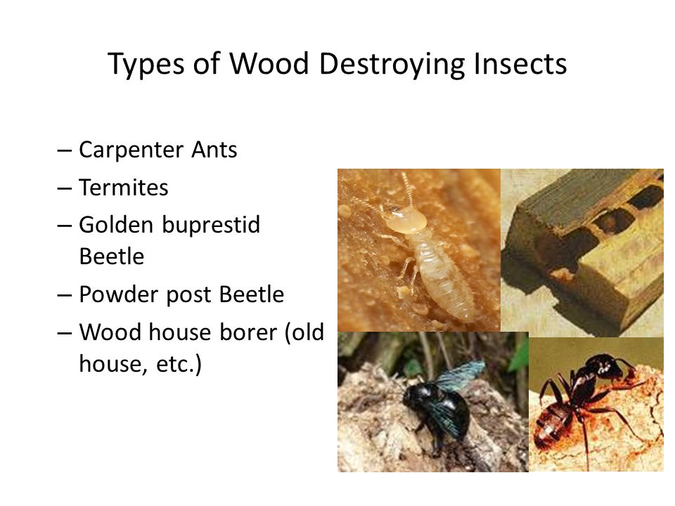 Types of Wood Destroying Insects
