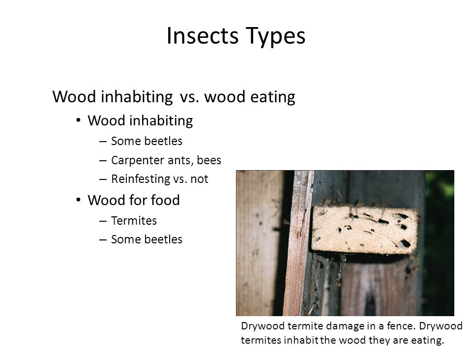 Insects Types Wood inhabiting vs. wood eating Wood inhabiting
