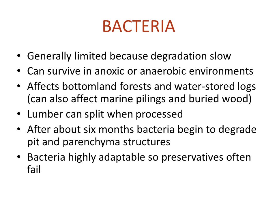 BACTERIA Generally limited because degradation slow