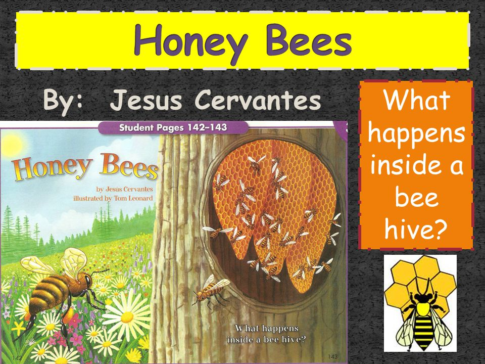 What happens inside a bee hive
