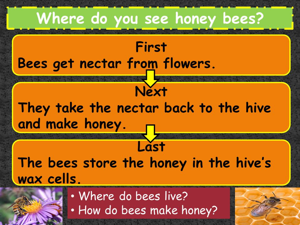 Where do you see honey bees