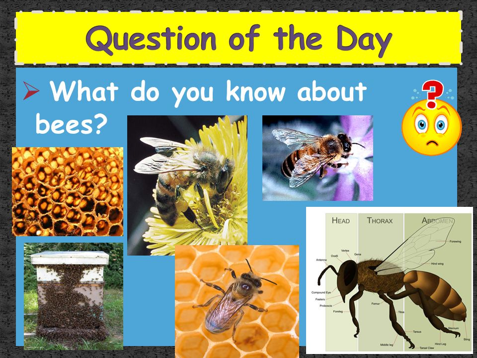 Question of the Day What do you know about bees