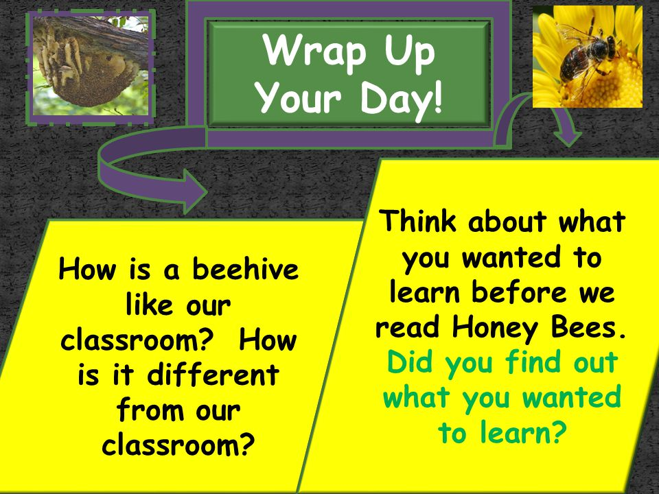 Wrap Up Your Day! Think about what you wanted to learn before we read Honey Bees. Did you find out what you wanted to learn