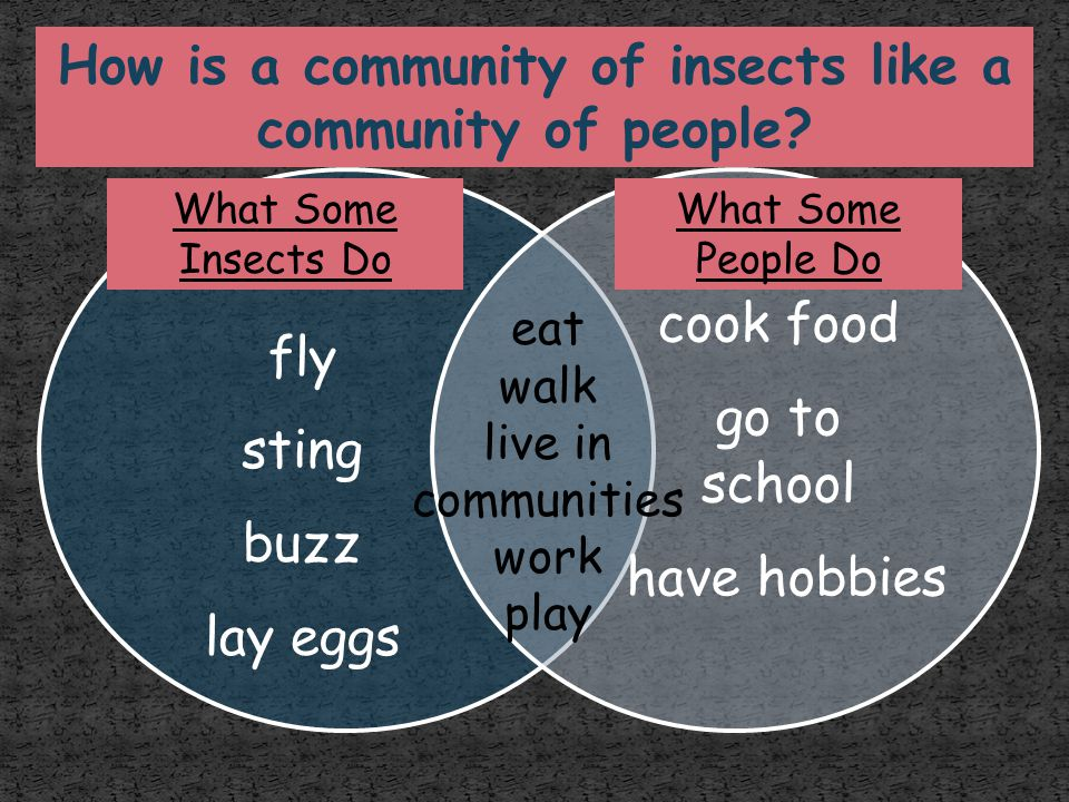 How is a community of insects like a community of people
