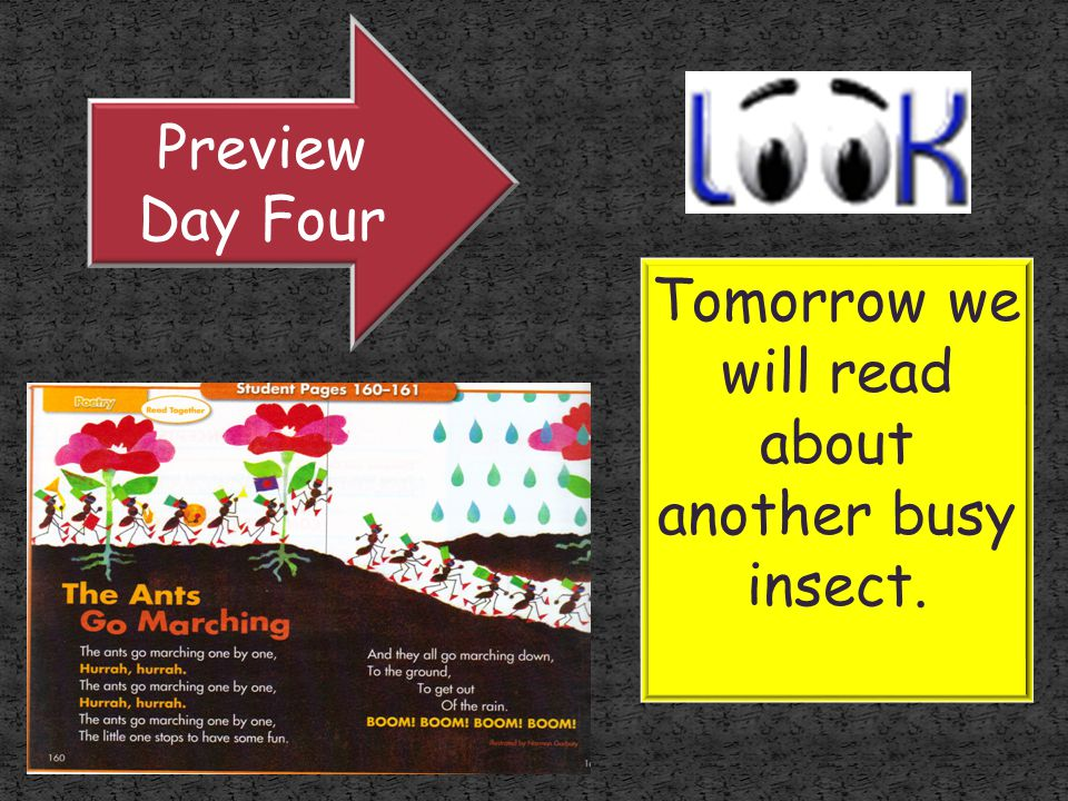 Tomorrow we will read about another busy insect.